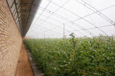 西藏日光温室大棚
